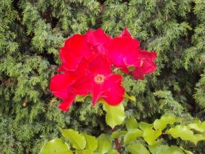 We ontdekken regelmatig prachtige bloemen en bomen.